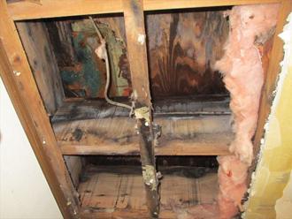 天井内部にカビが生えている