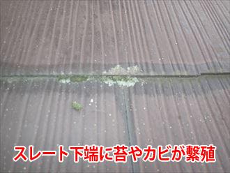 スレートの下端に苔やカビが発生