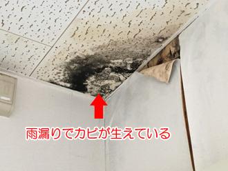 雨漏りで天井にカビが生えている